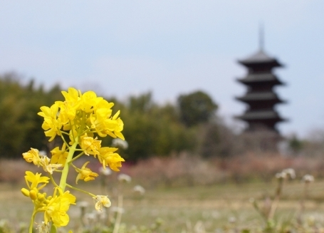 備中国分寺の五重塔